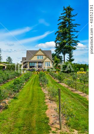 Berry farm house with bluebbery shrubs in front and blue sky background 48852191