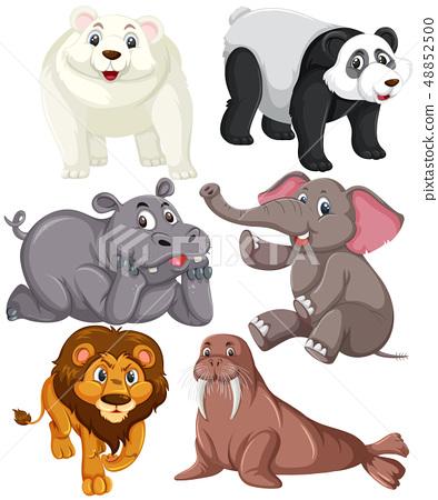 Set of animal character 48852500