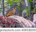 fox 48858699