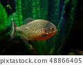 水生的 水下 魚 48866405