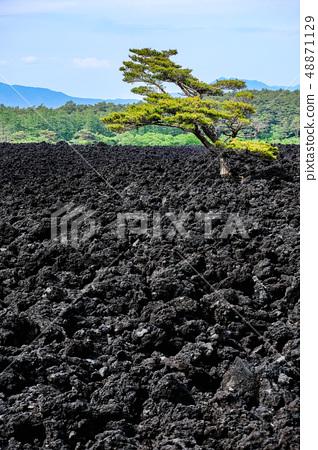 소 주행 용암 흐름 풍경 48871129
