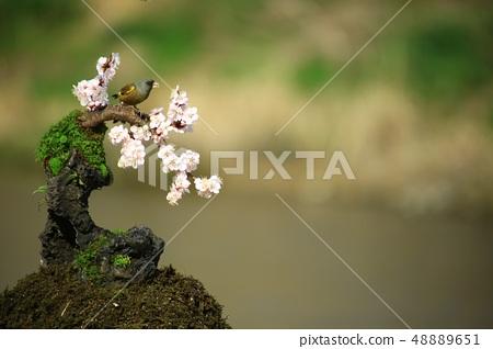방울새의 사랑, 봄 48889651