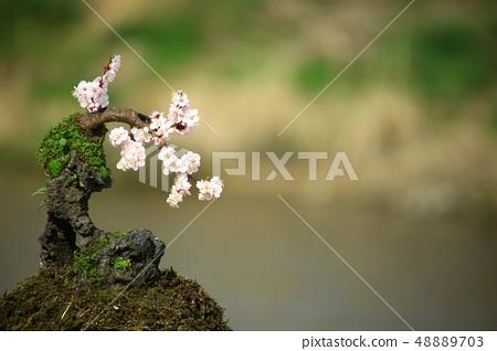 방울새의 사랑, 봄 48889703
