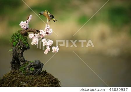 방울새의 날갯짓, 조류 48889937
