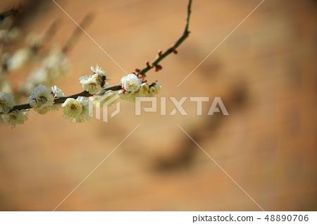 봄의전령사! ,봄 48890706