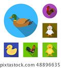鸭子 鸭 小鸭 48896635