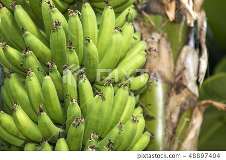 กล้วย 48897404