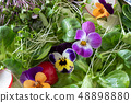 Salad with edible flowers and fresh microgreens 48898880