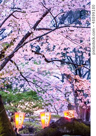點亮櫻花上野公園 48899180