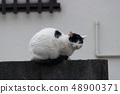 고양이 고양이 귀여운 48900371