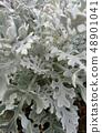 시로타에기쿠 48901041