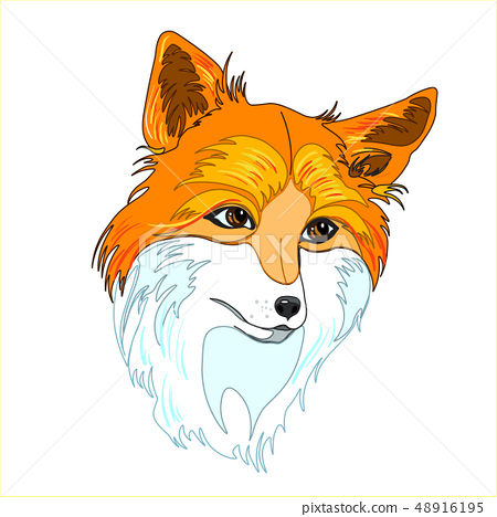 A hand drawn vector of a red fox's head 48916195