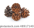 Big set of cones various coniferous trees isolated 48917140