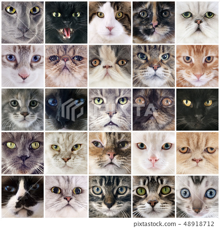 group of cats 48918712