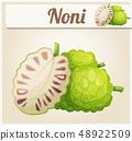 Noni fruit illustration. Cartoon vector icon 48922509