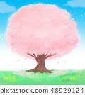 푸른 하늘에 피는 벚꽃 48929124