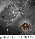 Web with frightening spiders 3d realistic vector 48944353