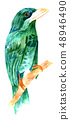 Watercolor drawing of teal and green bird, vintage style, isolated 48946490
