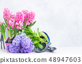 Gardening concept with hyacinth fresh flowers 48947603