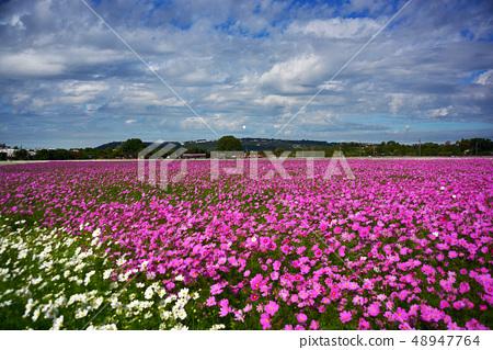 Haru Tengu,Masayo Kai的漂流花。 48947764
