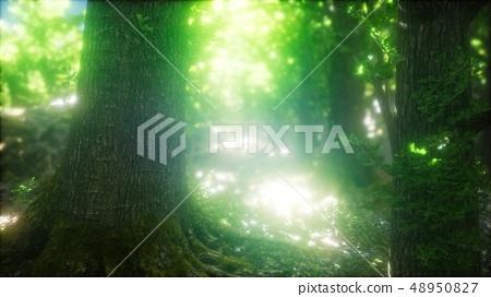 Sunbeams Shining through Natural Forest of Beech 48950827