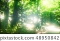 Sun Light in the Green Forest 48950842