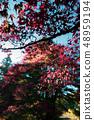 Autumn leaves 48959194