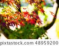 Autumn leaves 48959200