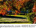 Autumn leaves 48959207