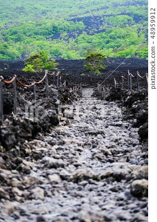 소 주행 용암 흐름 풍경 48959912