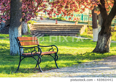 bench in the city park in pink cherry blossom 48960441