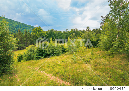 summer scenery on a cloudy day in mountains 48960453