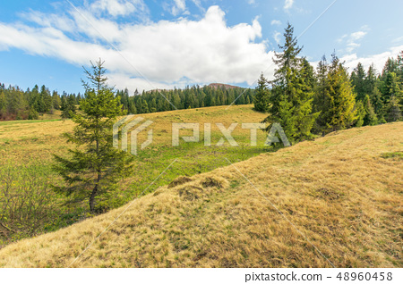beautiful springtime landscape in mountains 48960458