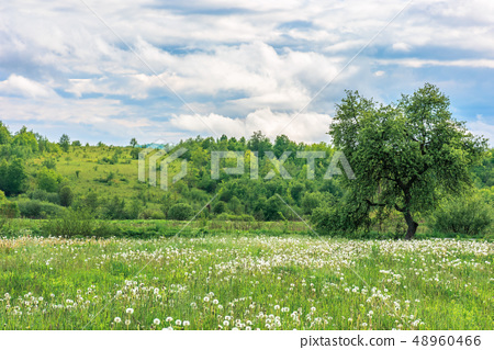 summer countryside in mountains 48960466