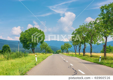 countryside road in to the mountains 48960516