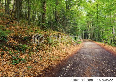 old asphalt road through beech forest 48960522