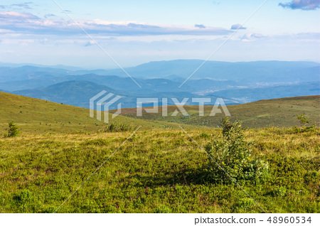 beautiful summer landscape in mountain 48960534