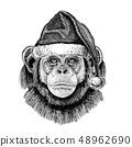 shimpanze_christmas_hat 48962690