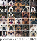 heads of dogs 48963828