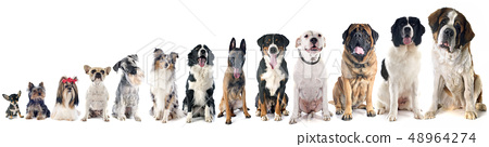 group of dogs 48964274