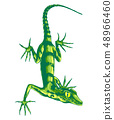 Lizard with long claws 48966460