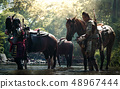 Asian Thai soldier in armor suit with horse 48967444