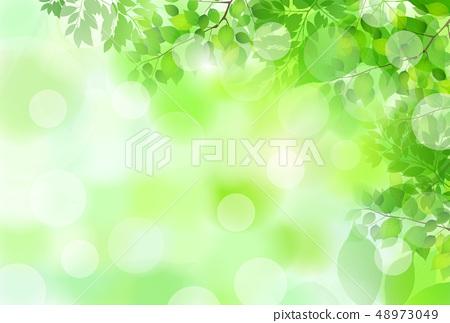 신록 잎 녹색 배경 48973049