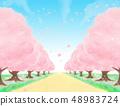 盛開!櫻桃樹行在春天在一個晴天 48983724