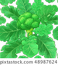 broccoli vector pattern 48987624