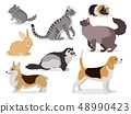 Pets icon set, cute gray chinchilla, fluffy ferret, smooth coated and domestic long-haired cats 48990423
