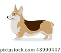 Cute corgi icon, small playful dog with short paws isolated, domestic animal, pet, vector 48990447
