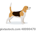 Cute beagle icon, small hunting dog with white and brown fur isolated, domestic animal, vector 48990470