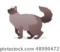 Long-haired cat with long fluffy tail icon, pet isolated on white background, domestic animal 48990472