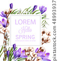 Crocus and cotton flowers Vector watercolor. 48993937